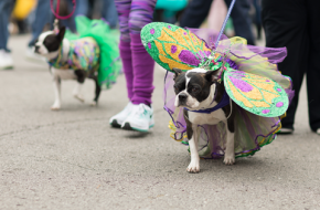 Join us for A Dog Parade!
